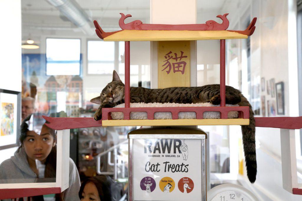 Cat Town Café, Oakland