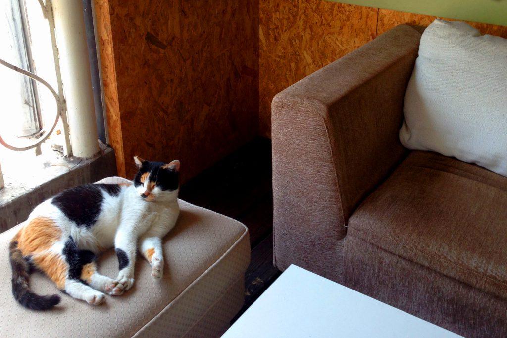 cat-cafes
