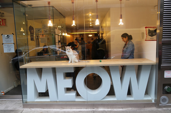 Meow Parlour, New York