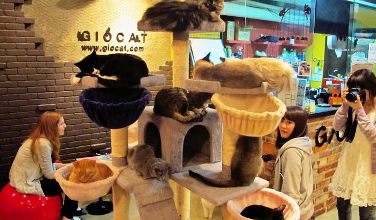 Cat Neko no Niwa, Singapore