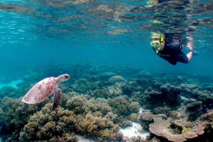 Snorkel-with-a-turtle-Ningaloo-Reef