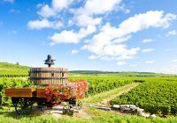 Beaune vineyard