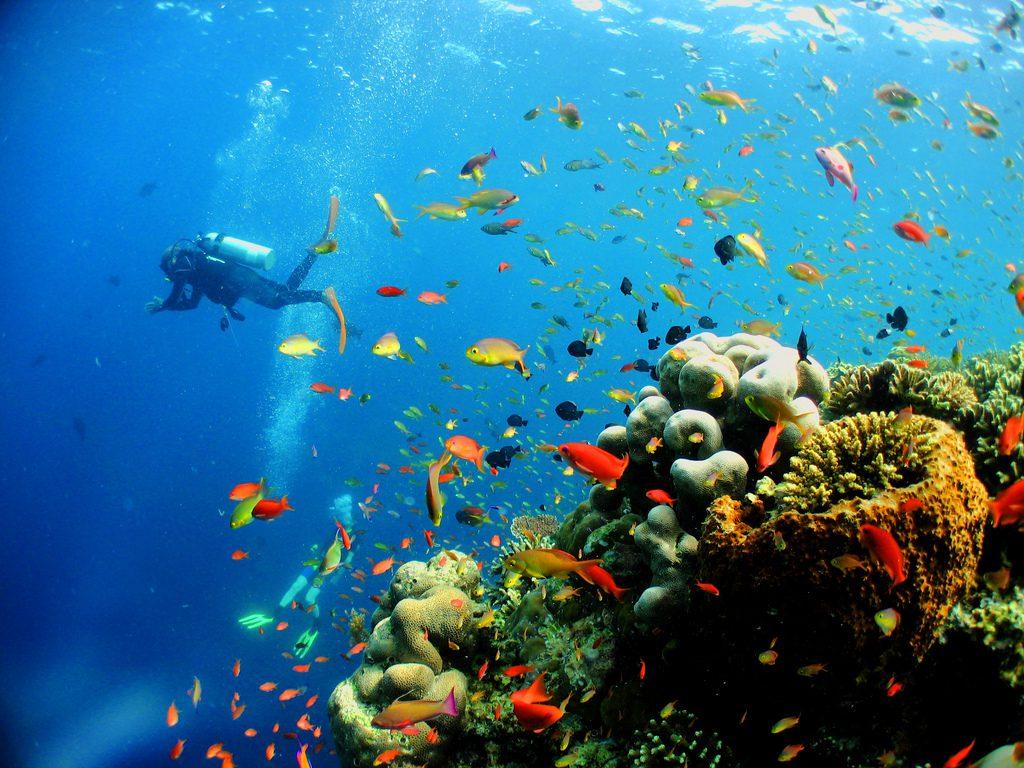 Scuba Diving at Penang