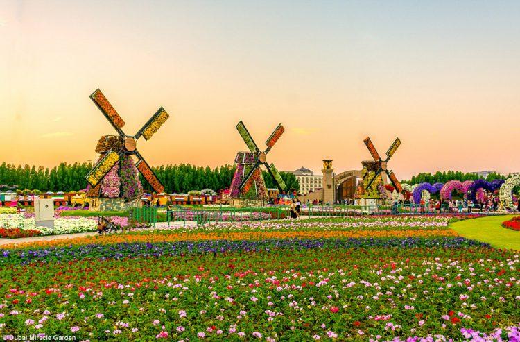 Dubai-Miracle-Garden-14
