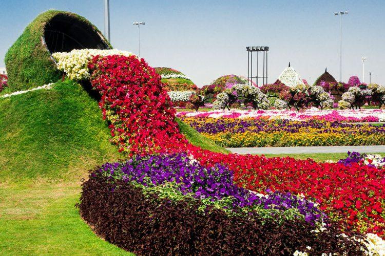Dubai-Miracle-Garden-Magical-Spill