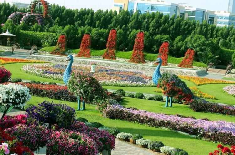 Peacocks - Miracle Garden