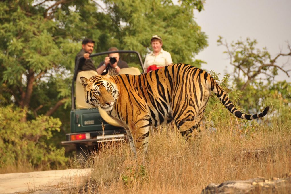 jeep-safari-in-corbett