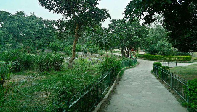 Tughlaqabad Ridge Forest