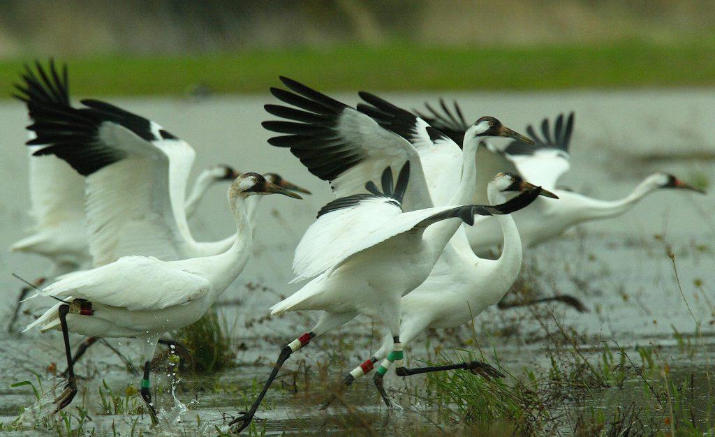 fauna india