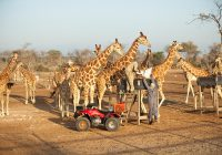Sir Bani Yas wildlife