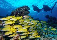 maldives-diving
